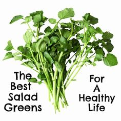 With so many choices to choose from, we narrow down the healthiest choices for salad greens!