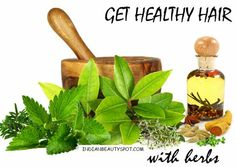 Get healthy hair with herbs #greenbeauty #haircare #howto #beautytips - bellashoot.com