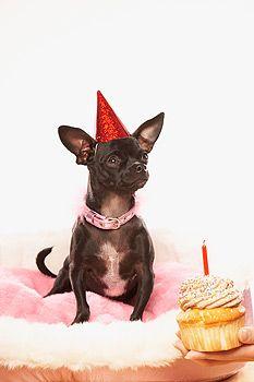 Dog Birthday Cake Recipes Dogbirthdaysandparties Dogbirthdaycakerecipe