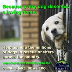 Join us in helping the millions of dogs in rescue shelters across the country