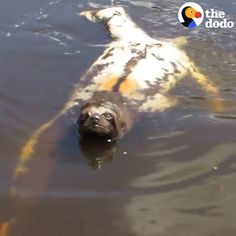 cool Sloths can swim! (via The Dodo)