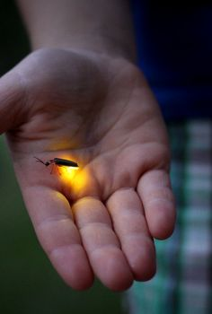 Country Living ~ Lightning bug in july...