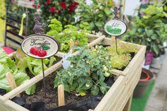 Vegetables growing in greenhouse, Augsburg, Bavaria, Germany Fruit Garden, Terrace Garden, Green Garden, Edible Garden, Vegetable Garden, Garden Plants, Growing Herbs, Growing Vegetables, Garden Organization