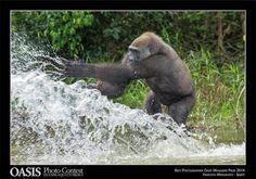 Oscar 2014 per le più belle foto della natura - Natura - Ambiente&Energia - ANSA.it