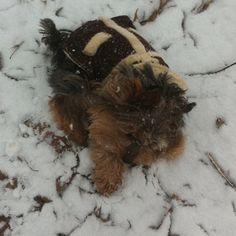 Princess kloey fighting the snow Snow, Princess, Dogs, Animals, Products, Animales, Animaux, Pet Dogs, Doggies