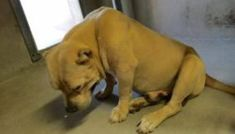 Blind and deaf dog impounded at shelter mourns for his lost home