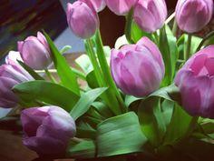 #stimmungsbild #tulpen #pfingsten #diekleinendingeimleben #menschbleiben