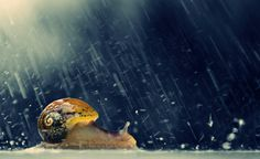 Photo Snail in the rain.. by Makis Bitos on 500px