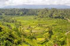 Bali by DRIEMS Photography 01 by Dries Mahieu on 500px