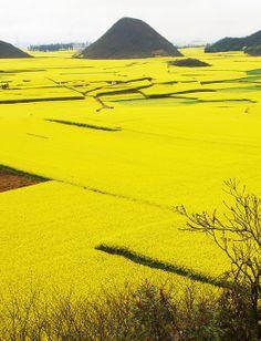 Yunnan,China: