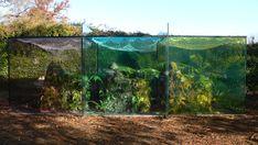 G R O S S . M A X . | garden for a plant collector