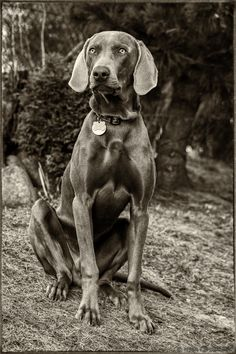 Our dog bw by Milan Cernak on 500px