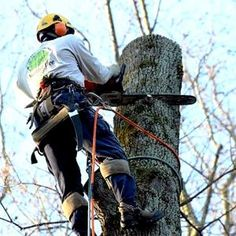 Contact a certified arborist to answer any questions you may have concerning your trees. (Photo courtesy of David Andrew)