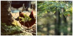 spring chicken by taralees on flickr