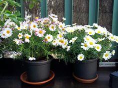 #flores #terraza #odelito