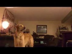 """My dog always howls during """"The Prayer"""" by Andrea Bocelli so my mom decided to film it. (x-post /r/videos) https://www.youtube.com/watch?v=QPpsCNd_TP0"""