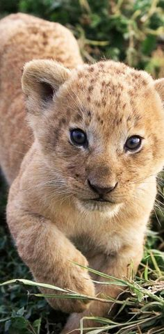 Sweet Baby Cub