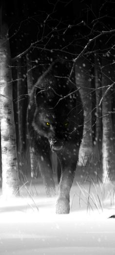 """The Beast pulled her ears and lips back. 'Éile' Blood orange eyes bejeweled the face of a wolf from the Veil. Fingers of black fog clung to the ebony fur of the wolf before me. Wolf Spirit, My Spirit Animal, Beautiful Creatures, Animals Beautiful, Regard Animal, Wolf Stuff, Wolf Quotes, Wolf Love, Wolf Pictures"