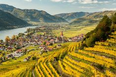 The Wachau Valley = WOW! photo: Avalon Waterways click image to find a travel advisor near you Trieste, National Geographic, Bangkok, Roads And Kingdoms, Avalon Waterways, Wachau Valley, Taj Mahal, Cycling Holiday, Austria Travel