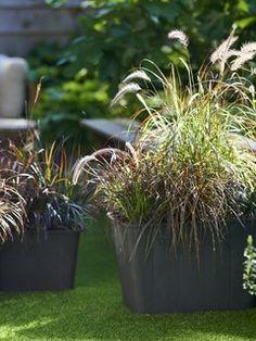 Der Herbst hat viele Seiten. Das zeigt sich auch in der Pflanzenwelt. Der Wechsel der Jahreszeiten ist die Zeit, in der viele wunderschöne Pflanzen zu leuchten beginnen. Ob wir nach Pflanzen suchen, um unseren Eingangsbereich zu verschönern, einen herbstlichen Kranz zu gestalten oder den Garten mit Farbe zu füllen – die Auswahl ist riesig. Wir präsentieren hier eine Auswahl typischer Herbstpflanzen, die wir in der kommenden Saison in vollen Zügen genießen können! Low Maintenance Garden, Farmhouse Garden