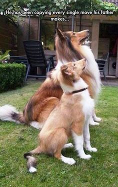 These extra-wholesome dog memes are giving us new life. Check out some of our favorite dog memes now and don't forget to pin your favorite! Read More: Funny Animal Memes Of The Day - 32 Pics Funny Animal Pictures, Cute Funny Animals, Dog Pictures, Random Pictures, Cute Puppies, Cute Dogs, Dogs And Puppies, Funny Dog Memes, Funny Dogs