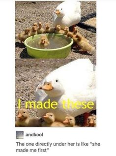 36 Funny and Cute Animal Pictures Humor Animal, Funny Animal Memes, Cute Funny Animals, Funny Animal Pictures, Cute Baby Animals, Funny Cute, Animals And Pets, Funny Memes, Hilarious