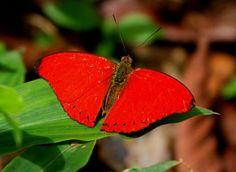 amazon rainforest butterflies - Google Търсене