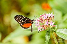 Butterfly by davidyuweb, via Flickr