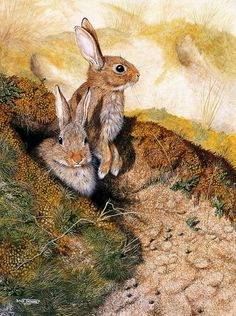 Dick Twinney This picture reminds me of WATERSHIP DOWN, one of my all time favorite books! Lapin Art, Watership Down, Marc Chagall, Rabbit Art, Bunny Art, Woodland Creatures, Wildlife Art, Beautiful Creatures, Pet Birds