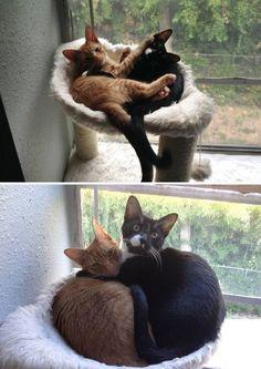 Очаровательные животные, которые выросли вместе