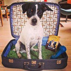 Hugo the Danishswedish farmdog and his suitcase.