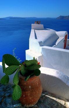 The Sad Cactus - Santorini, Greece  by brian denton