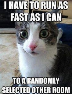 funny cat meme with a wide-eyed cat looking directly at you and the caption I have to run as fast as I can to a randomly selected other room...