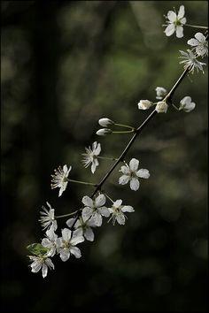 Primavera ven a mi