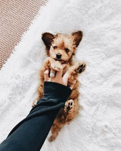 Jess Conte and Milo Animals And Pets, Baby Animals, Funny Animals, Cute Animals, Cute Puppies, Cute Dogs, Dogs And Puppies, Doggies, Silly Dogs