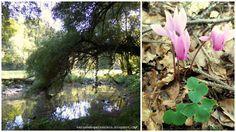 Plants, Blog, Inspiration, Thoughts, Nature, Life, Biblical Inspiration, Blogging, Plant