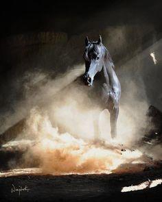 Arabian Horse by Wojtek Kwiatkowski
