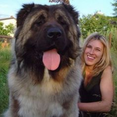 That's A Big Dog   Just Cute Animals