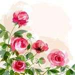 Peony stock photos and images