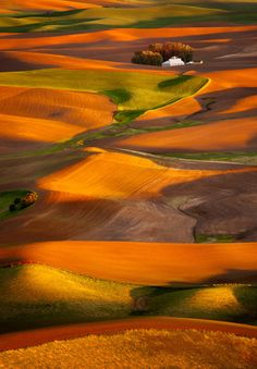 nrmanandhar: fields of gold by robin harrison