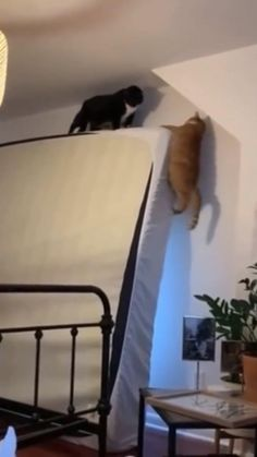Funny Videos Clean, Crazy Funny Videos, Funny Videos For Kids, Crazy Funny Memes, Funny Animal Jokes, Funny Cute Cats, Cute Funny Animals, Cute Wild Animals, Cute Little Animals