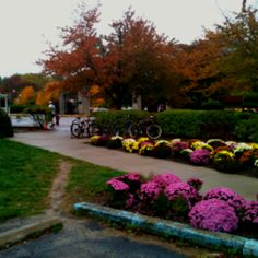 IU Campus - Bloomington, Indiana - beautiful fall colors and one of the most beautiful campuses in the country :)
