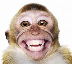 Mono encantadísimo de vernos