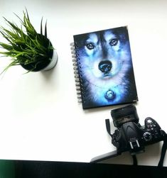 Notebook with siberian husky