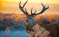 wild animals wallpaper retina hd download 5Wallpaper: Desktop ...
