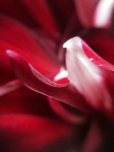 #macro #flower #petals #plant #photography