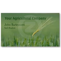 A solitary ear of barley business card template Price varies according to size, qty and card stock.