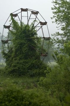 Could you imagine discovering this on a nature walk? Ferris Wheel, reclaimed by nature.
