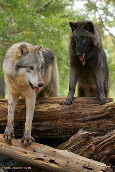 Seacrest Wolf Preserve (in Chipley)