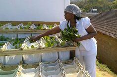 Umgibe : cultiver des légumes dans des sacs suspendus pour nourrir les townships